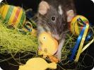 Wichteln Ratteneck